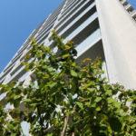 不動産の賃貸経営で法人化する、マンション・アパートの相続税対策